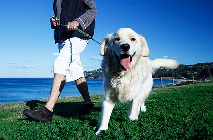 Pets may reduce the risk of Heart Disease